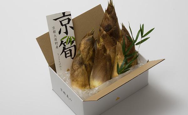 京都大原野産筍